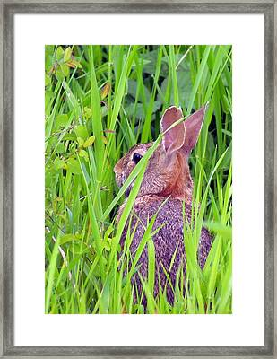 Framed Print featuring the photograph Survival by I'ina Van Lawick