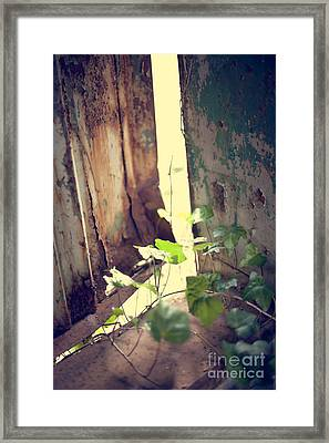 Survival Of The Fittest Framed Print by Jaclyn Burns