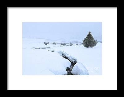 Landscape With Creek Framed Prints