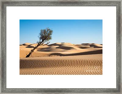 Surviving Framed Print by Delphimages Photo Creations