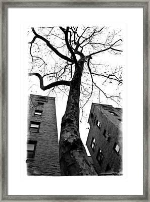 Survivor Framed Print by Larry Goss