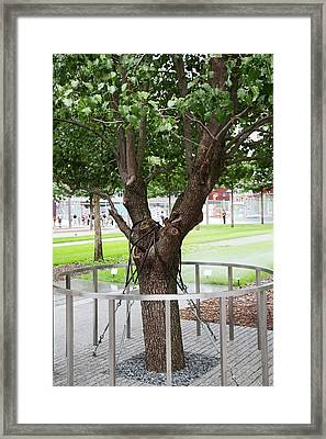 Survivor Tree Framed Print