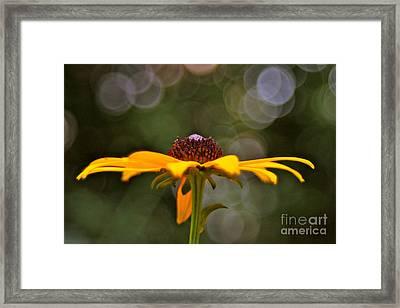 Susan's Framed Print