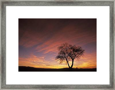 Susie's Tree Framed Print by Latah Trail Foundation