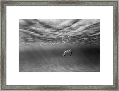 Suspended Animation. Framed Print by Sean Davey