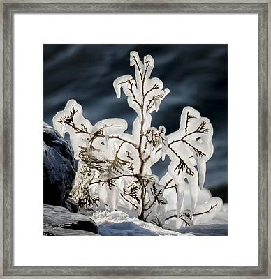 Suspended In Ice Framed Print