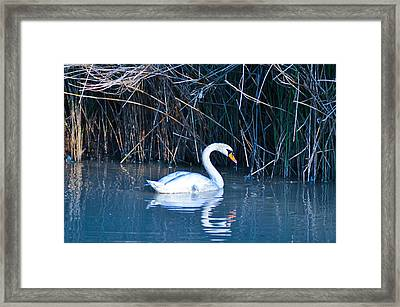 Suwannee River Framed Print by Bill Cannon
