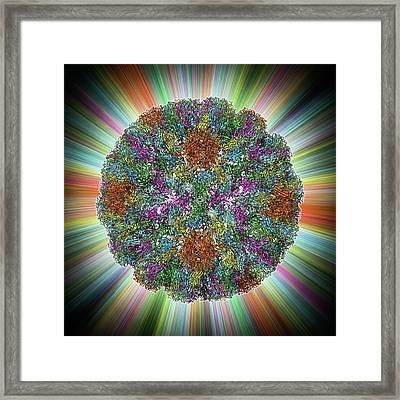 Sv40 Virus Capsid Framed Print by Laguna Design