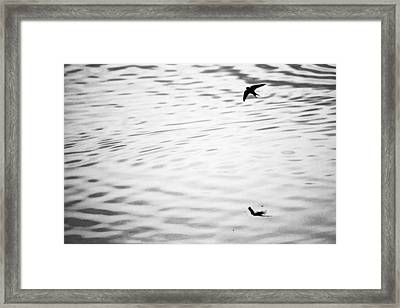 Swallow In Sunset Framed Print