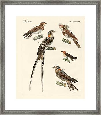 Swallow-like Birds Framed Print by Splendid Art Prints