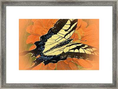 Swallow Tail Vignette Framed Print by Joel Deutsch