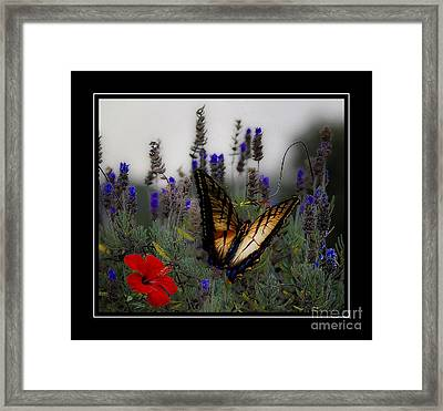 Swallowtail Among Blue Flowers Framed Print
