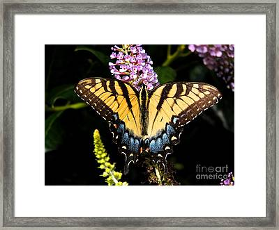 Swallowtail Beauty Framed Print