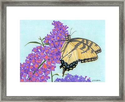 Swallowtail Butterfly And Butterfly Bush Framed Print by Sarah Batalka