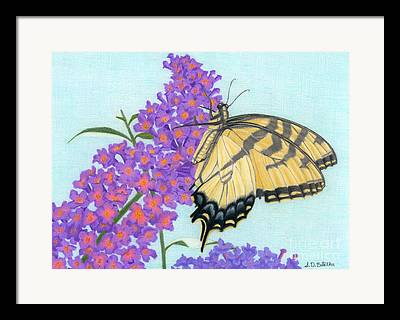 Nectar Drawings Framed Prints