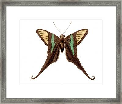 Swallowtail Butterfly Framed Print by Collection Abecasis