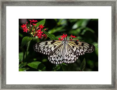 Swallowtail Butterfly Framed Print by Henry Inhofer