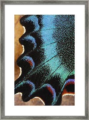 Swallowtail Butterfly Wing Scales Framed Print