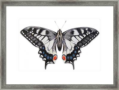 Swallowtail Framed Print by Ele Grafton