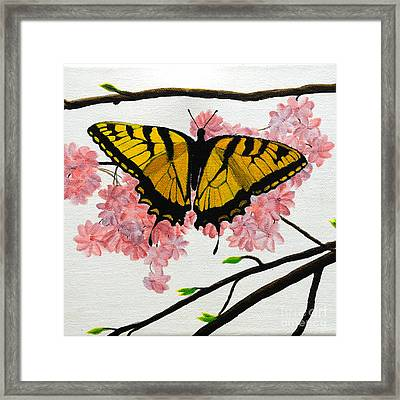 Swallowtail In Cherry Blossoms Framed Print by Jane Axman