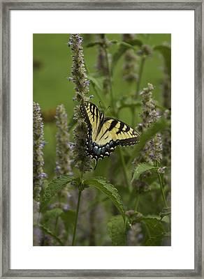 Swallowtail In Flower Field Framed Print