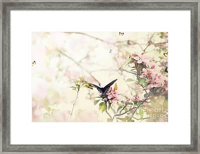 Swallowtail In Spring Framed Print by Stephanie Frey