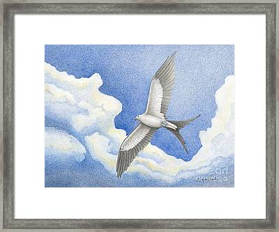 Swallowtail Kite Framed Print