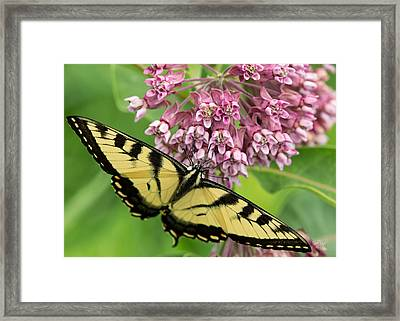 Swallowtail Notecard Framed Print by Everet Regal