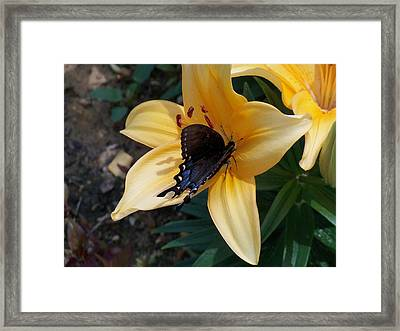 Framed Print featuring the photograph Swallowtail On Asiatic Lily by Kathryn Meyer