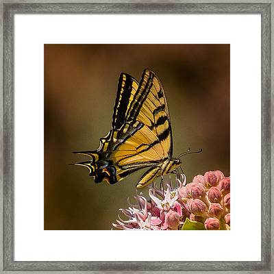 Swallowtail On Milkweed Framed Print by Janis Knight