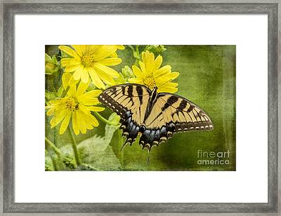Framed Print featuring the photograph Swallowtail by Vicki DeVico