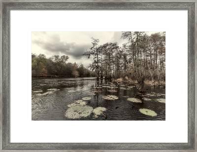 Swamp Alive Framed Print by Stellina Giannitsi