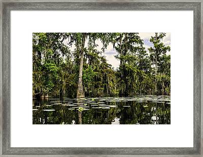 Swamp Beauty Framed Print by Janet Fikar