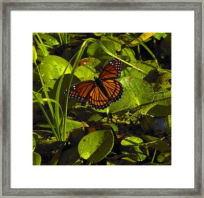 Swamp Butterfly Framed Print by Silke Brubaker