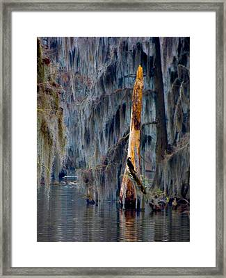Friends In Backwoods Places Framed Print by Kimo Fernandez