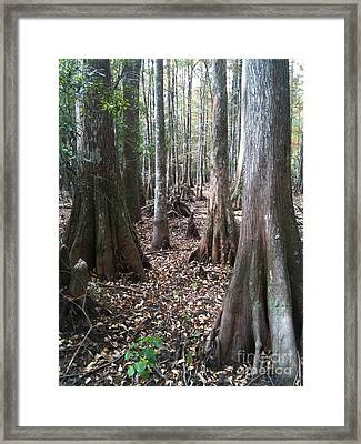 Swamp Edge Portrait Framed Print
