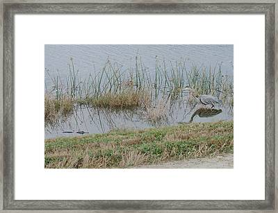 Swamp Food Chain Framed Print