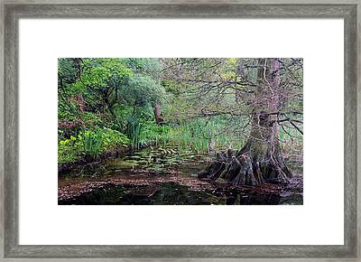 Swamp Garden Framed Print