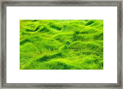 Swamp Grass Abstract Framed Print