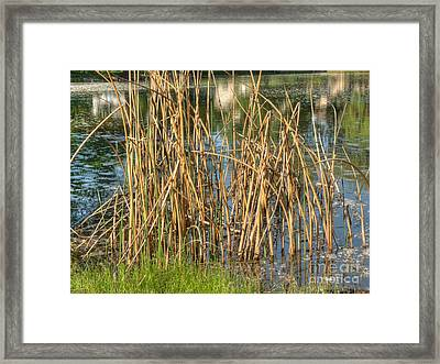 Swamp Grass Framed Print by Deborah Smolinske