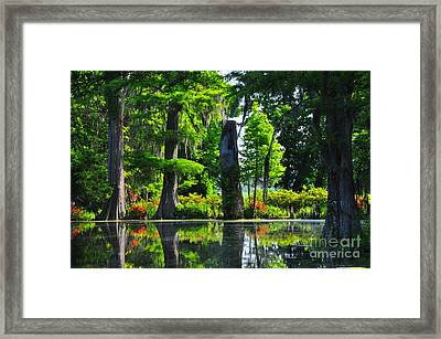 Swamp In Bloom Framed Print