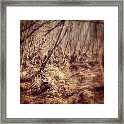 Swamp In Spring Framed Print