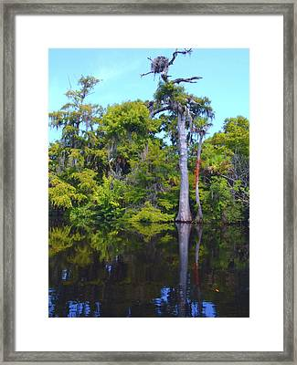Swamp Land Framed Print by Carey Chen