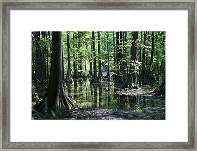 Swamp Land Framed Print by Cathy Harper