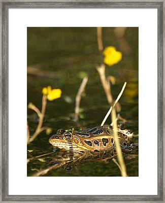 Swamp Muscian Framed Print by James Peterson