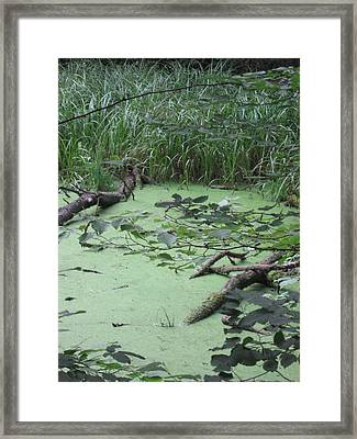 Swamp Framed Print by Nora Boghossian
