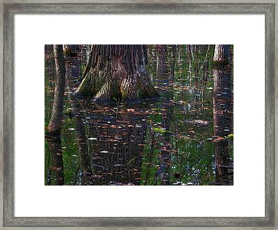 Swamp Framed Print