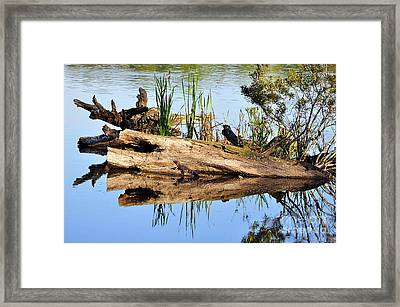 Swamp Scene Framed Print by Al Powell Photography USA