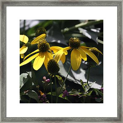 Swamp Sunflowers I Framed Print by Suzanne Gaff