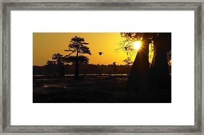 Framed Print featuring the photograph Swamp Sunrise by Silke Brubaker